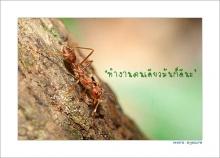 A-Ant มด.. ข้อคิดในการทำงาน