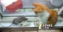 มาดูว่า หนูกับแมวอยู่ร่วมกันอย่างไร