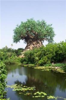 ต้นไม้มหัศจรรย์ที่ Andra Pradesh ---India