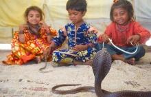 เด็กน้อย VS งูพิษ