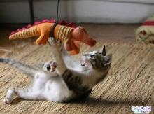 วินาทีเดือด!!! แมวน้อยปะทะจระเข้