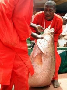 ~~~ การจับปลาในประเทศไนจีเรีย ~~~