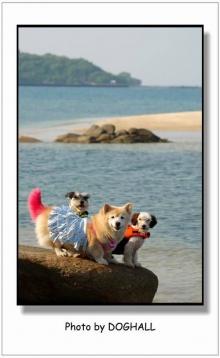 พาน้องหมาไปเที่ยวเกาะ♡