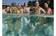 อาบน้ำกับเสือ