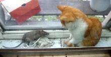 จะเกิดอะไรขึ้น เมื่อแมวกับหนูมาพบกัน