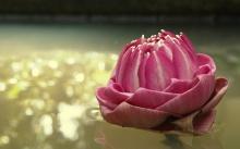 Lotus ใครว่าดอกบัวไร้ซึ่งความงาม