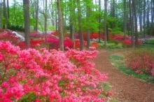 ***ทุ่งดอกไม้สวยๆ --2 ^^***