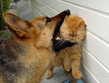น้องสัตว์...น่ารักกันจัง