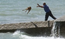 คุณคิดว่า..เขาทำอะไรกับสุนัข..เล่าด้วยภาพ