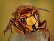 โอ้วว.! สีสันโดนใจ แฟนซีแมลง !!