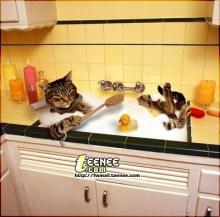 วิธีอาบน้ำแมว รับรองสะอาดแน่นอน หุหุ