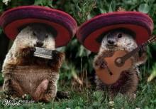 นักดนตรีสัตว์โลก