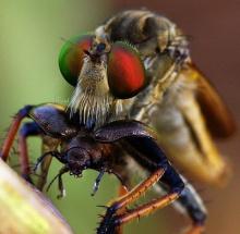 เรื่องเล่า ( ด้วยรูป ) ของแมลง