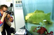 ปลาทองของจริง ทองจริงๆๆ !!