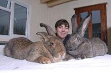 โคตะระกระต่าย