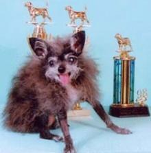 สุนัขที่น่าเกลียด ที่สุดในโลก (Ugliest dog)