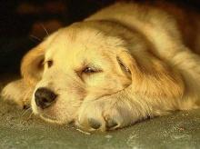 หมาน้อยผู้น่ารัก!!