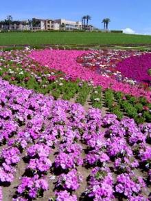flower garden!!~