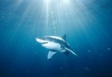 มารู้จักฉลามกัน