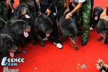 tibetian dog part 2