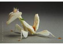 ตั๊กแตนยงโย่ผูกโบว์ทัดดอกจำปา