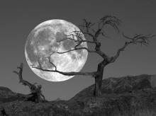The Moon เห็นแล้วคุณรู้สึกอย่างไร