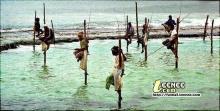 พวกเค้ากำลังตกปลาอะไรอยู่นะ