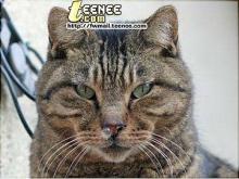 เคยเห็นป่ะ เจ้าสีเทา (แมว) หน้าเอ๋อๆ ตอนเป็นหวัด คิคิ