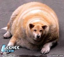 ใครว่ามีแต่คนเท่านั้นที่อ้วนได้